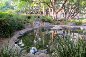 the-turtle-and-koi-pond